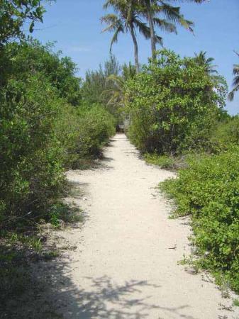 Chumbe Island Coral Park: Chumbe 'High Street'