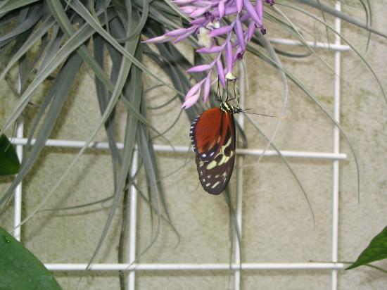Baden-Wurttemberg, Germany: Butterfly House