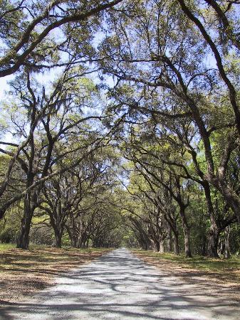 สะวันนา, จอร์เจีย: Savannah Driveway