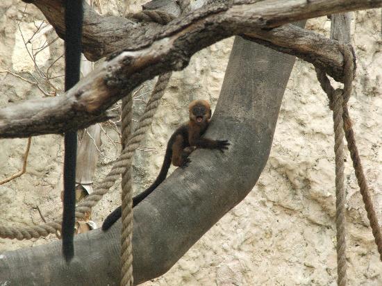 San Antonio Zoo : baby monkey