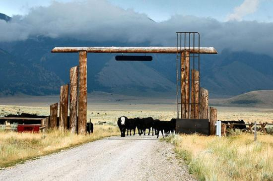 Fish Creek House Bed and Breakfast: Cattle Drive