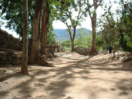Copan, Honduras: Beautiful Area sheltered from the harsh sun by Ceiba trees