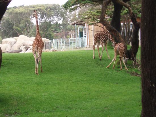 San Francisco Zoo Photo