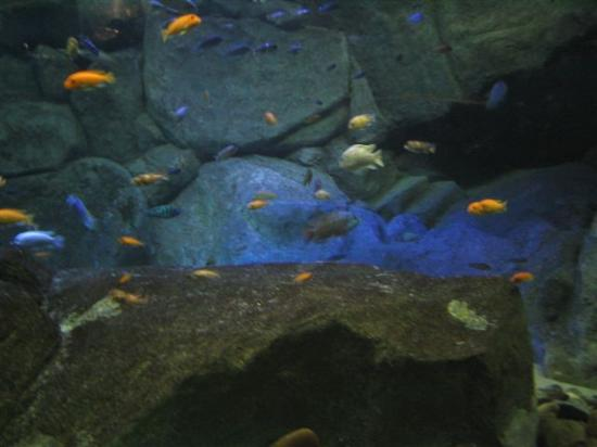 New York Aquarium Brooklyn Top Tips Before You Go With