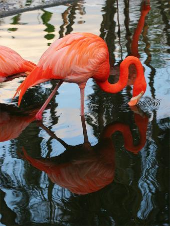 เดวี, ฟลอริด้า: Flamingo Garden - very nice wildlife sanctuary