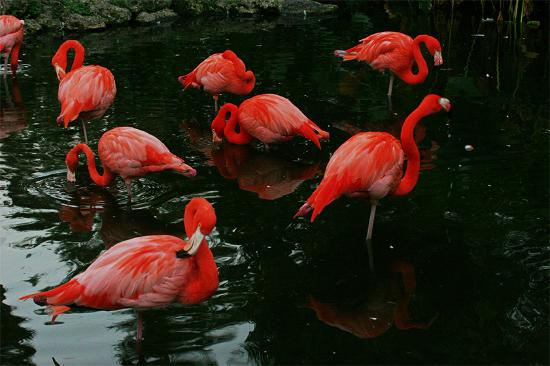Davie, Floride : Flamingo Garden - very nice wildlife sanctuary