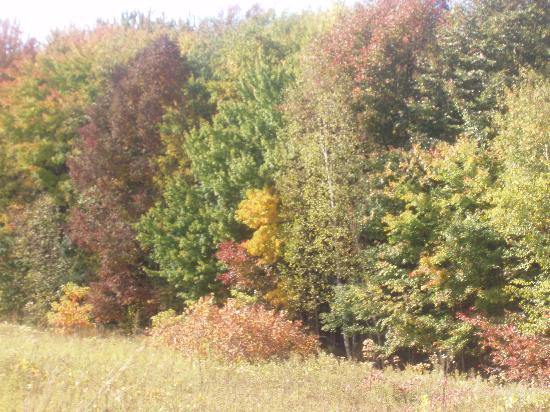 Indiana Dunes State Park: Fall Colours