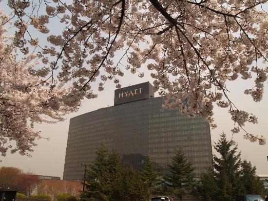 โรงแรมแกรนด์ ไฮแอท: Grand Hyatt in April Cherry blossoms