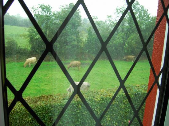 Hawthorn Lodge B & B: No raincoats on the cows