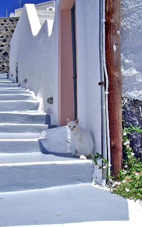 Cat on Santorini Steps