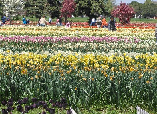Veldheer Tulip Garden Foto