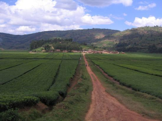 Rwanda Photo
