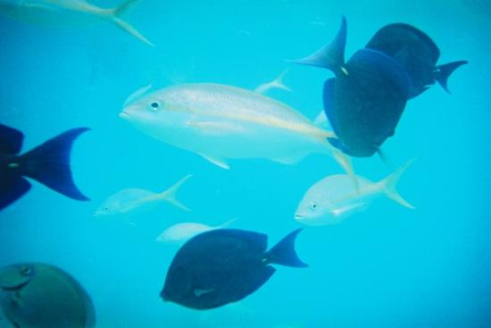 ClubHotel Riu Merengue: Some of the fish I saw whilst SCUBA diving