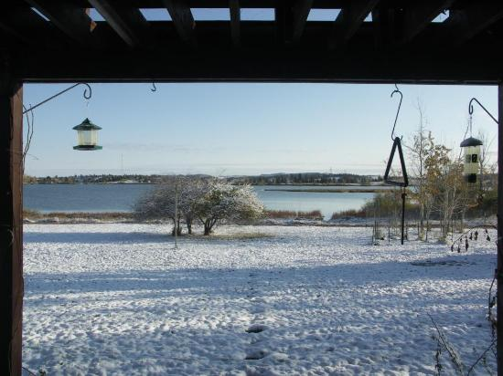 Lakeview Bed and Breakfast: Backyard View