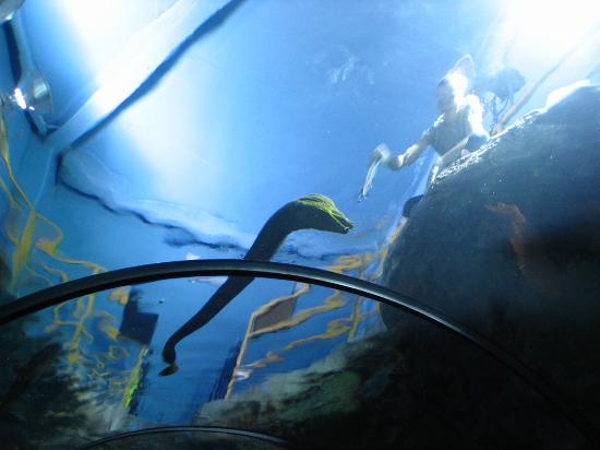 ... eels - Picture of ABQ BioPark Aquarium, Albuquerque - TripAdvisor