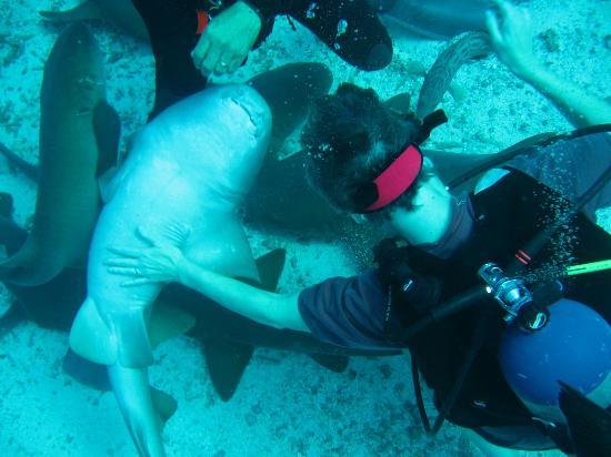 El Pescador Resort: Dive master Alonzo holds a nurse shark so my wife can rub it's belly