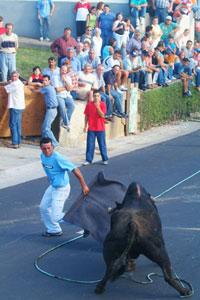 street bullfight