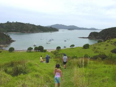 Walking track-Moturua Island