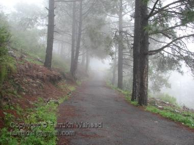 A walking track on PirSowaha Hill Station