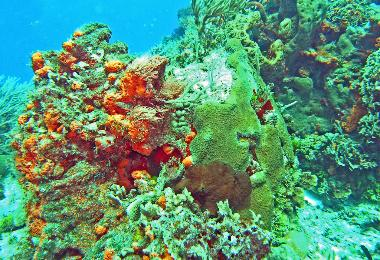 a coral formation