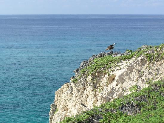 Tradewind Guest Suites on Salt Cay: Osprey on the hill