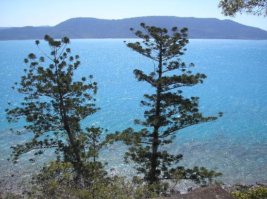 Daydream Island, Australia: view from the rainforest walk trail