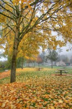 Salmon Creek Park: fall at klineline