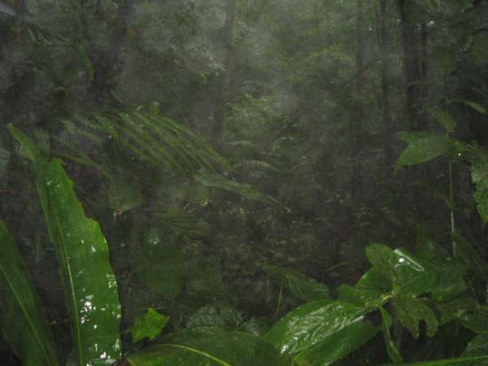 Allegro Papagayo: Rainforest