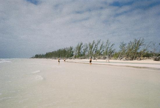 Gold Rock Beach Resmi
