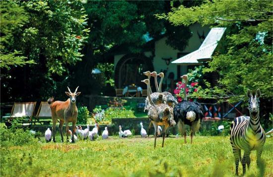 Mount Meru Game Lodge & Sanctuary: The lodge and sanctuary