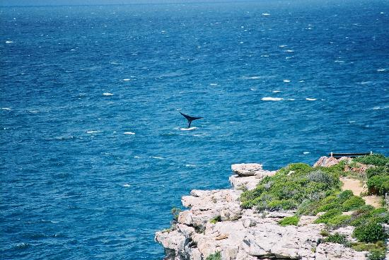 On the Cliff Guest House: Whale showing off tail from room
