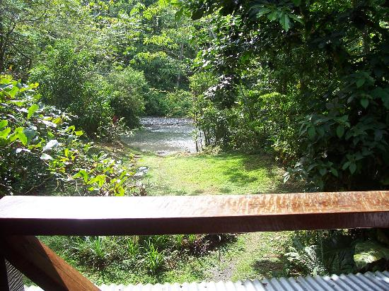 Bosque del Rio Tigre: View from the upstairs sitting area