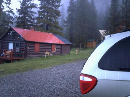 Cooke City Alpine: A couple of deer wandering near the hotel!
