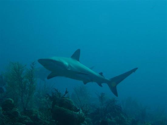 Stuart Cove's Dive Bahamas: Pic I took while down under!