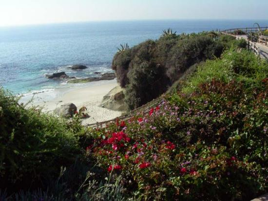 Laguna Beach Photo