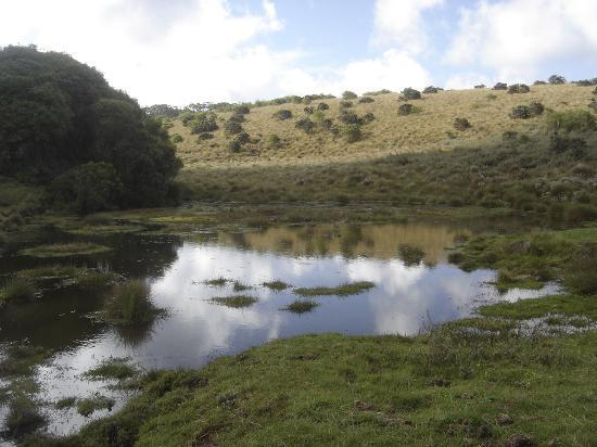 Aberdare National Park, Kenia: high altitude moorlands