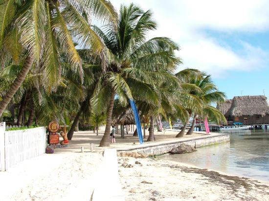 San Pedro, Belize: Palm studded resort on the water