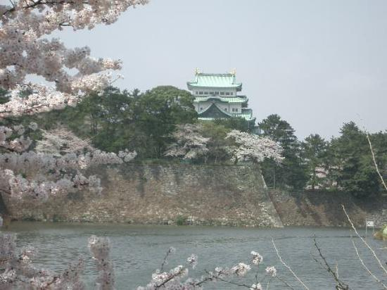 Kyoto, Japan: Cherry blossoms and Nagoya Castle