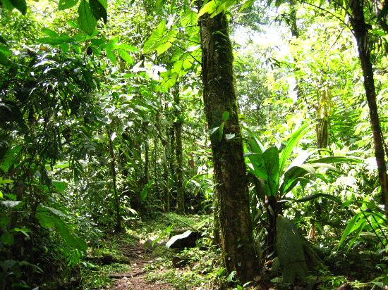San Jose, Costa Rica: Sendero Las Botarramos
