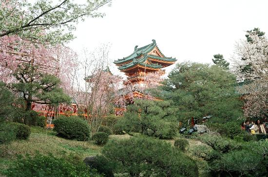 Kyoto, Jepang: Cherri blossoms at heian Jingu Shrine