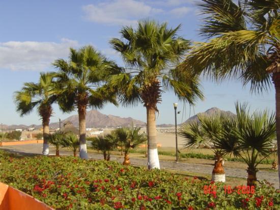 San Felipe Marina Resort & Spa: Beautifully kept grounds