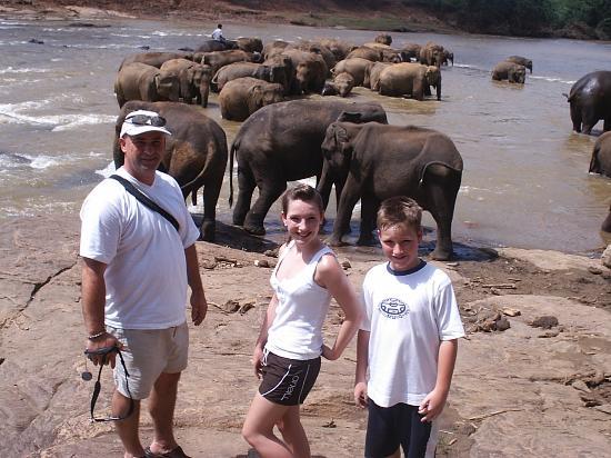 Wunderbar Beach Club Hotel: Elephants at Kandy