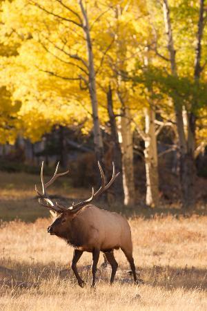 Zdjęcie Estes Park