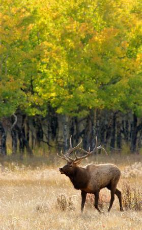 Estes Park Photo