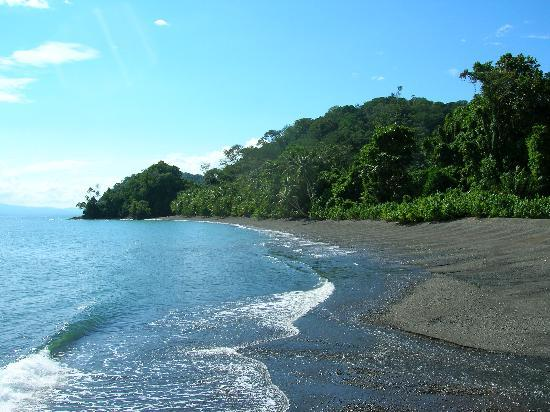 Playa Nicuesa Rainforest Lodge: View of the beach north