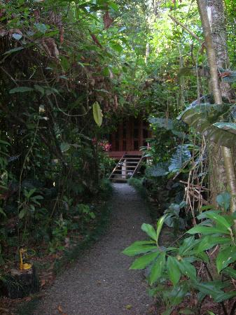 Playa Nicuesa Rainforest Lodge: Path to the Cabina El Dorado