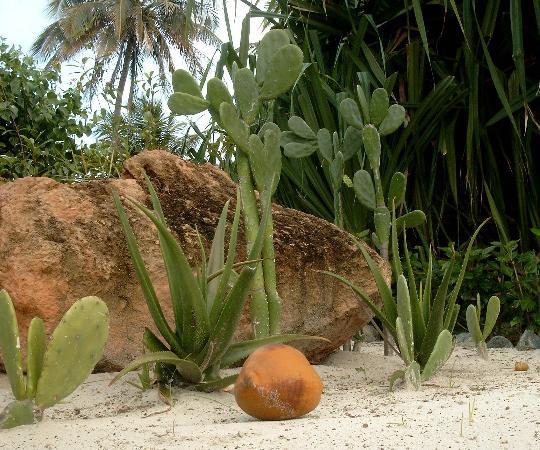 Hotel Club Kawama: Die Kokosnuß hätte auch dich treffen können :-)