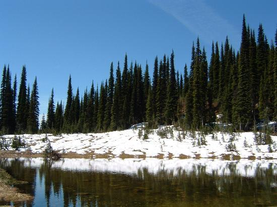 Revelstoke, Canadá: The snow is starting to melt away.