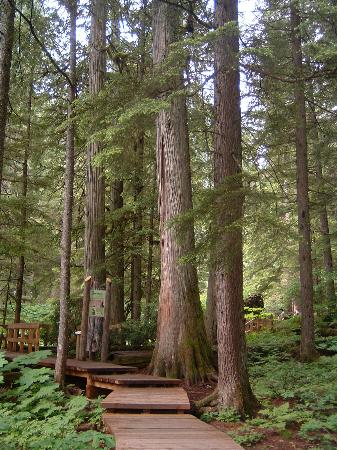 Giant Cedars Boardwalk Trail: start of the trail