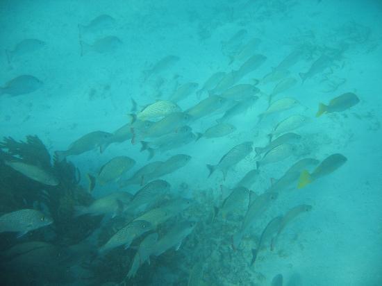 Casa Blanca - Rancho San Eric: Nearby Snorkeling